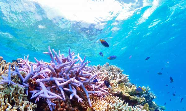 コライユは珊瑚