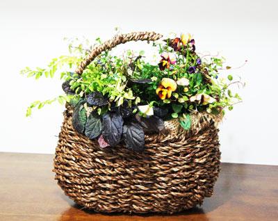 女性のための整体院コライユ 玄関の花
